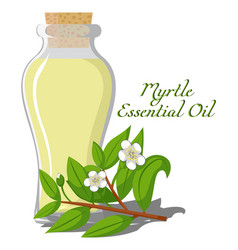 Essential oil myrtle vector