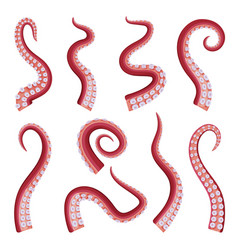 octopus tentacles collection seafood underwater vector image