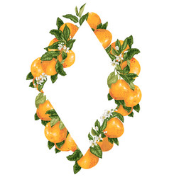 rhombus frame decoration with citrus grapefruit vector image