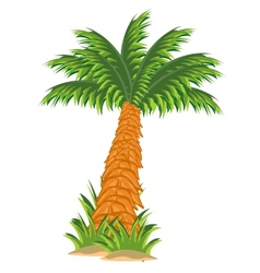 Tree palm vector image