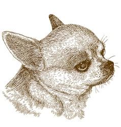 engraving chihuahua head vector image