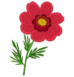 Flower adonis vector