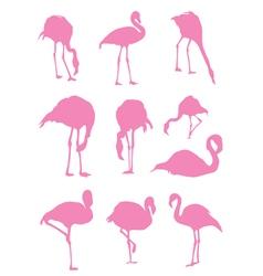 flamingos pink vector image