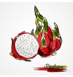 pitahaya fruits vector image
