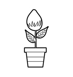 Potted flower natural bulb growth plant decoration vector