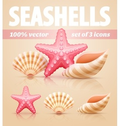Set of summer sea shells and vector