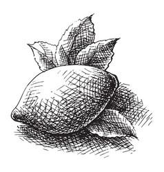 whole sliced lemon vector image