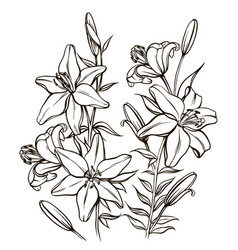 bouguet of lilies vector image vector image