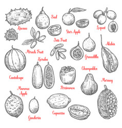 delicious exotic tropical fruits sketches isolated vector image