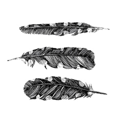 Hand drawn dotted feathers on white background vector image vector image