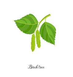 Drawing branch birch tree vector