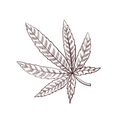 drawing cannabis leaf vector image