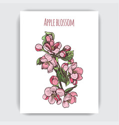hand drawn colorful postcard with apple blossom vector image