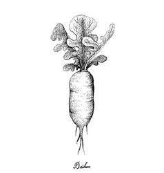 Hand drawn of fresh daikon radish on white backgro vector