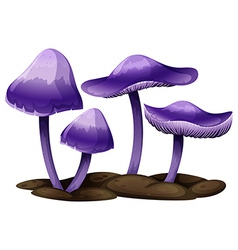 Purple mushrooms vector image