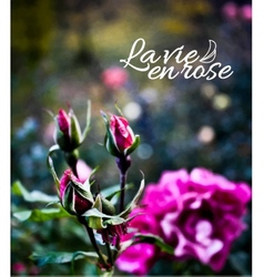 Rose garden realistic background vector