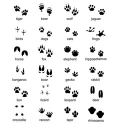 Set of footprints of wild animals vector