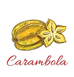 Tropical carambola fruit isolated sketch vector image