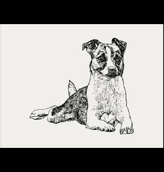hand drawn portrait of a cheerful dog vector image vector image