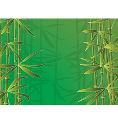 bamboo forest vector image