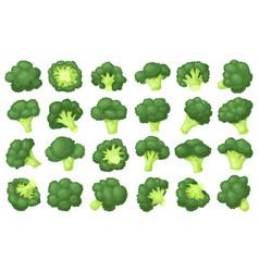 Broccoli crumbs cartoon set icon vector