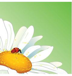 Daisy and ladybird vector