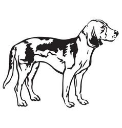 decorative portrait of dog estonian hound vector image