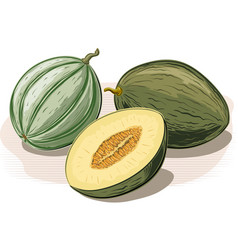 White melon whole and one cut in half vector