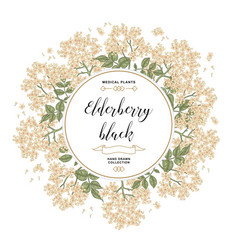 Hand drawn background with elderberry black vector