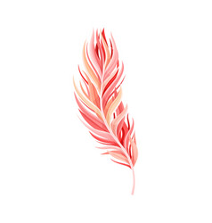 Red bird feather with nib as avian plumage vector