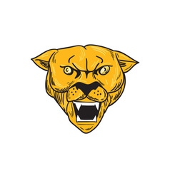 Angry Cougar Mountain Lion Head Drawing vector image vector image