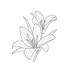 Two Lilies Flower Monochrome Drawing For Coloring vector image
