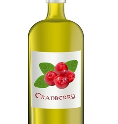 cranberry vector image vector image