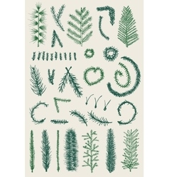 Hand drawn set green fine branch isolated vector