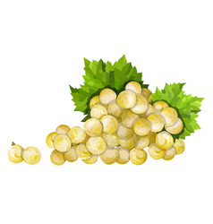 ripe green grape green bunch with leaves vector image