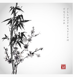 bamboo and sakura in blossom vector image vector image