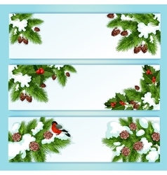 Christmas banner with holly berry and fir branches vector image