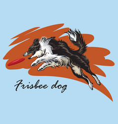 Decorative border collie playing frisbee vector