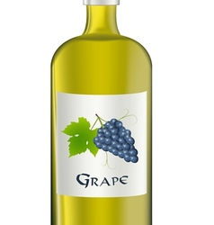 grape vector image