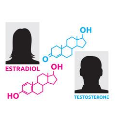 Hormones concept vector