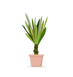 palm tree in pot palm vector image