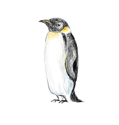 penguin hand drawn vector image