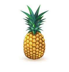 Pineapple realistic summer exotic fruit isolated vector