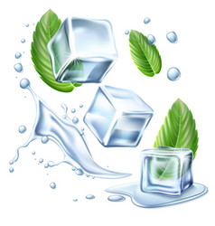 Realistic ice cubes mint green leaves set vector