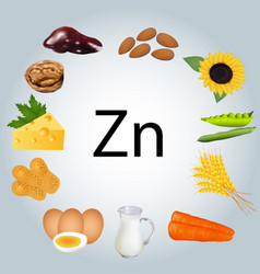 food rich in zinc healthy eating vector image