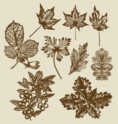 hand drawn leaves vector image vector image