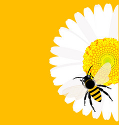 Daisy flower with bee background vector