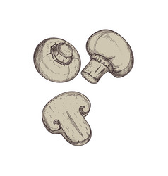 Fresh mushroom hand drawn isolated icon vector