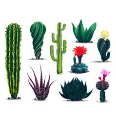 Mexican cactuses cartoon prickly succulent plants vector