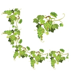 Set grapes frame vignette and repeated element vector